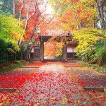 autumn hd wallpaper 1080p