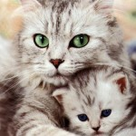 beautiful-cat-and-kitten-cats
