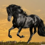 black_horse_running-wallpaper